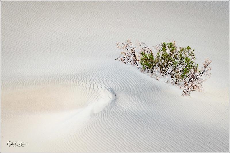 S73_0493 plant in dunes LPr1W.jpg