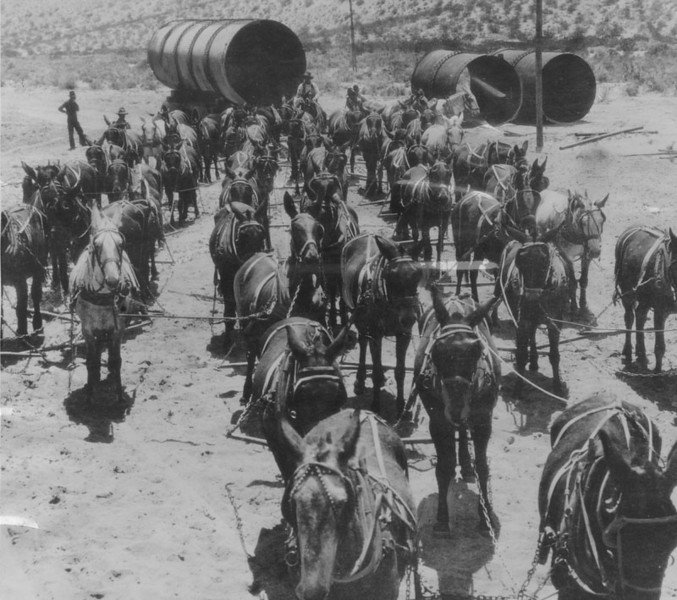 . Transportation was largely by mule power when the Los Angeles Aqueduct was under construction. This photo taken in 1912 shows a 52-mule team hauling sections of aqueduct pipe. Work on the aqueduct was started on September 20, 1907.   (Los Angeles Public Library)