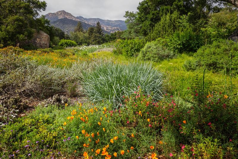 S.B. Botanic Garden, for Joyous.