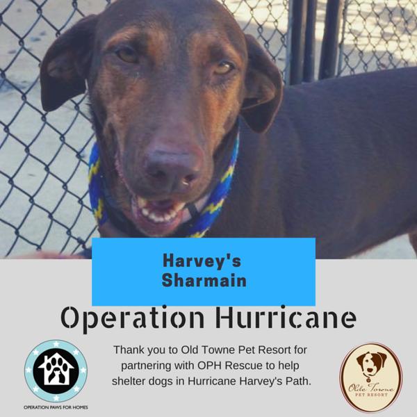 HarveysSharmain.png