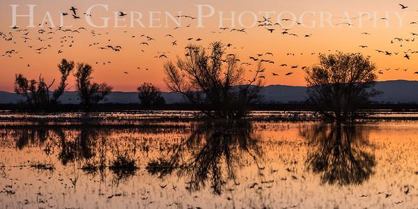 Merced National Wildlife Refuge 2016
