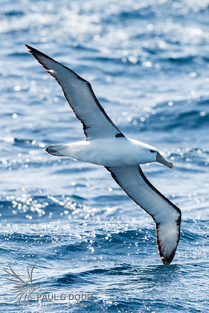 Portland Pelagic, Mar 2017