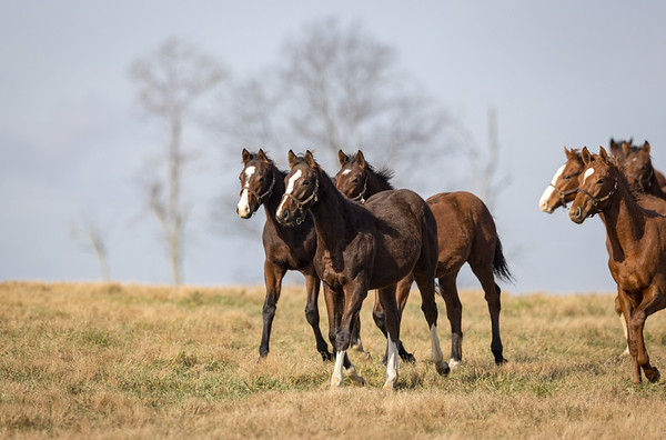 Three Chimneys Yearlings '21