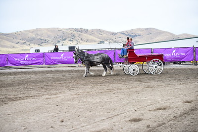 2017 Young Living Draft Horse Show