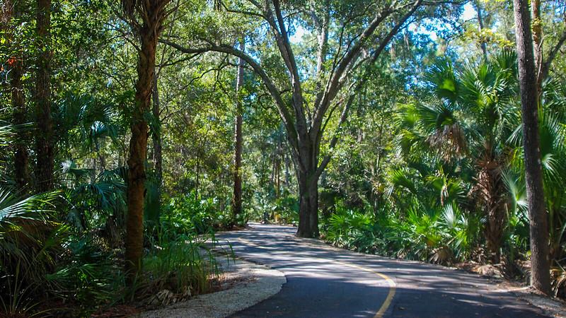 Trail through oak hammock
