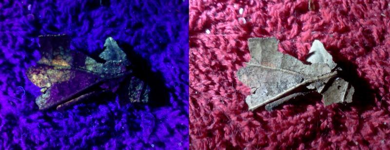 257099962-UVleafMoldComposite.jpg