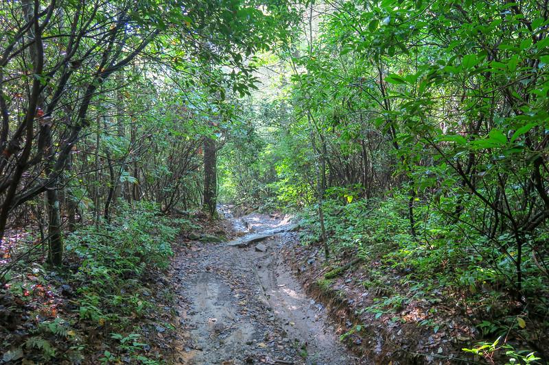 Cove Creek Trail -- 3,080'