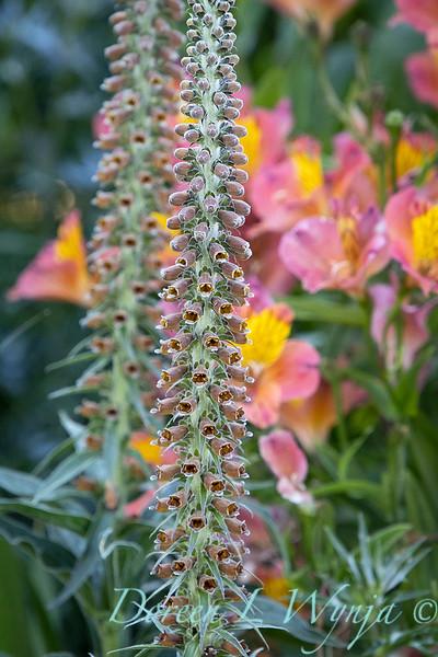 Pettifer's Garden - Virginia Price designer_1011.jpg