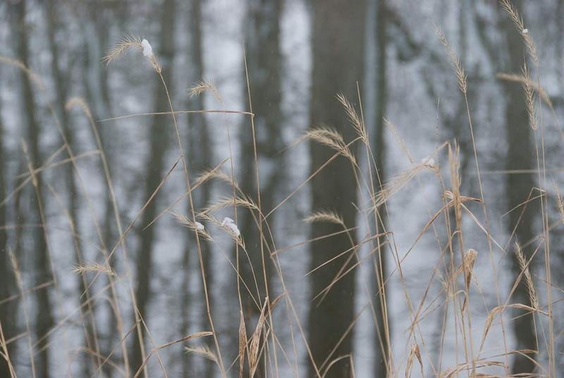 wintergrasses.jpg