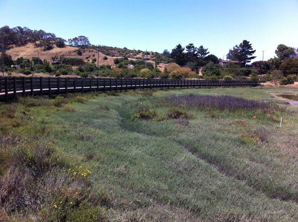 . A boardwalk gives visitors a chance to walk out into the marsh.  (Joan Morris/Staff)