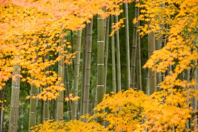 2014 Kyoto Autumn