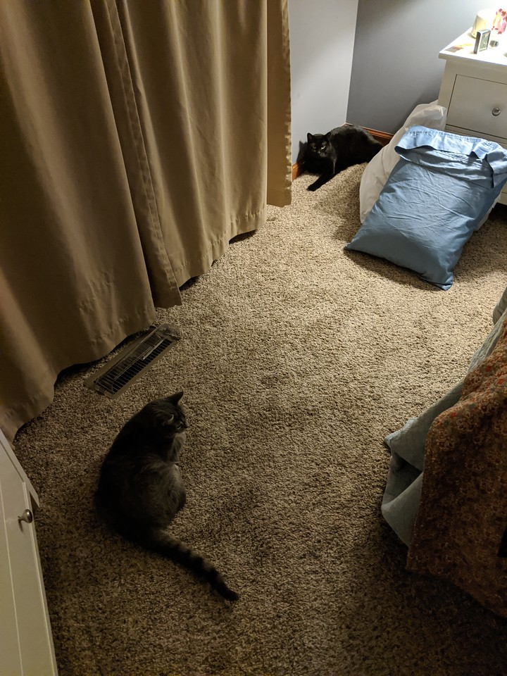 The cats were hiding in our bedroom (this is not a normal spot for them at night), very disturbed by all the Sunday night shenanigans