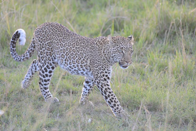 East Africa Safari 171.jpg