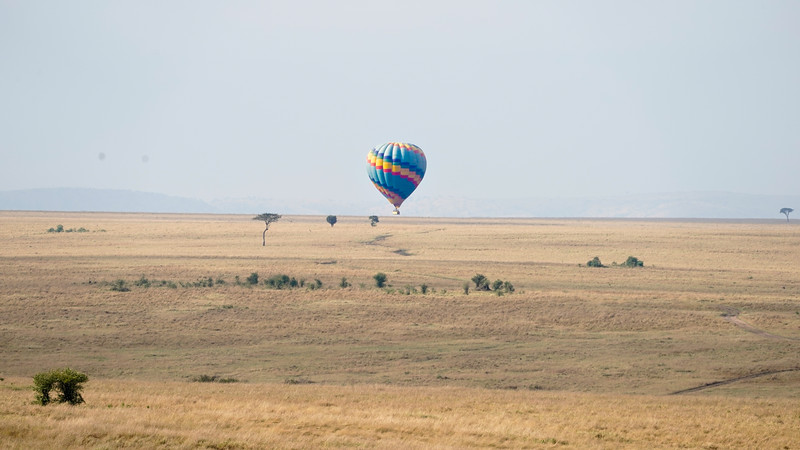 safari-2018-125.jpg