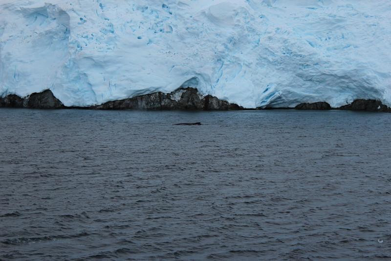 Antarctica 148.JPG