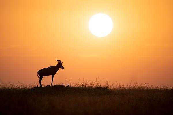 Kenia | Masai Mara