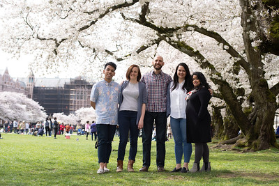 Public Health-Global Health Major and Cherry Blossoms