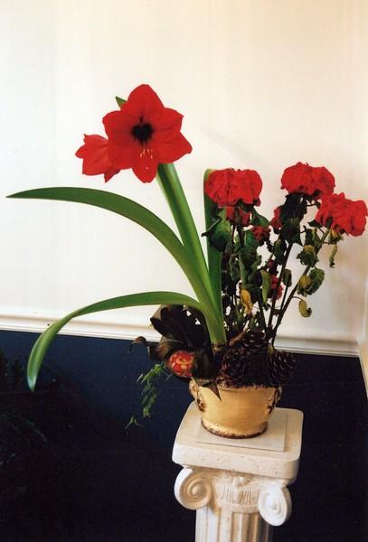 2003_December_Flowers from Liz Griot_0005_a.jpg