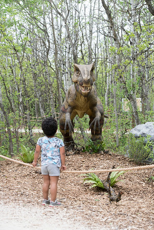 DAVID LIPNOWSKI / WINNIPEG FREE PRESS  Five-year-old Alissa Wilder checks out the Yangchuanosaurus at the Dinosaurs Alive! exhibit at the Assiniboine Park Zoo Sunday May 22, 2016.