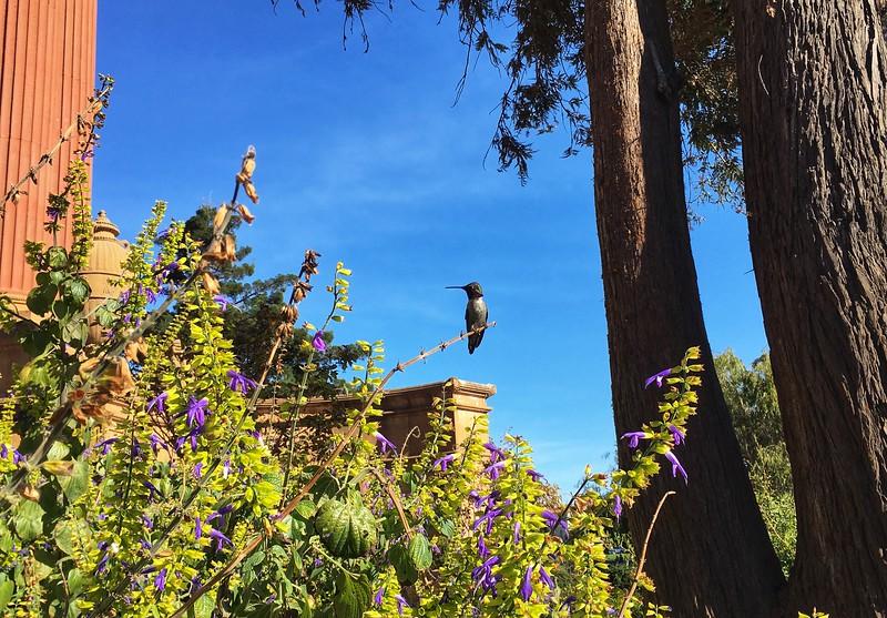 Rare moment of hummingbird not zipping around