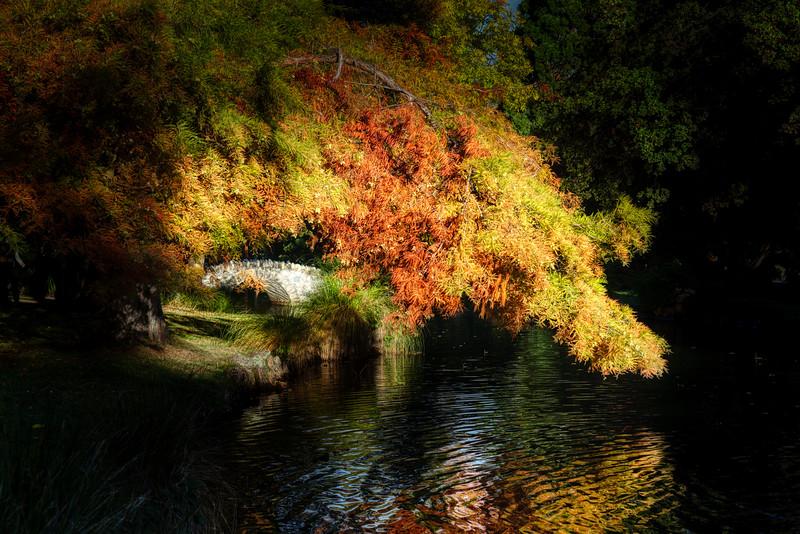 The Dappled Pond