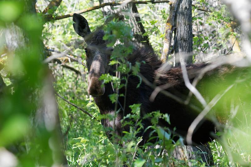 Face in the bush