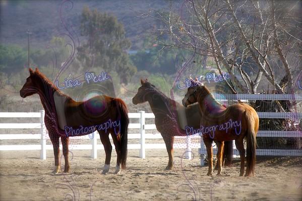 Sue Horses