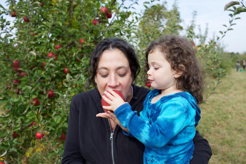 Apple Picking 11