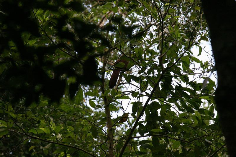 Guatemala Tikal 0 094.JPG