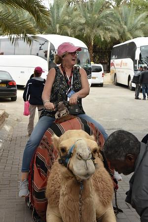 3 - Camel Kissing