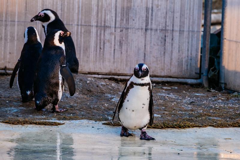 Tonis Zoo-0409.jpg