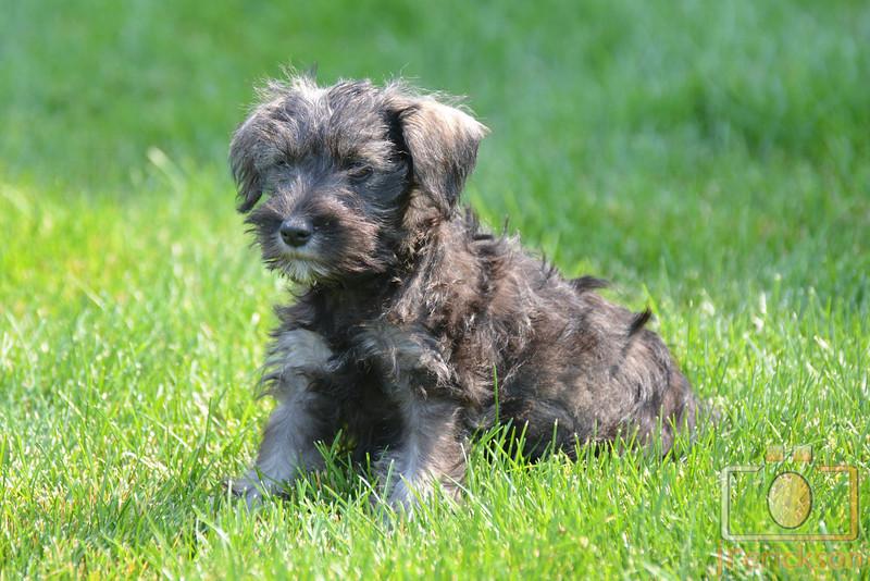 Merry Puppy 8-26-2013