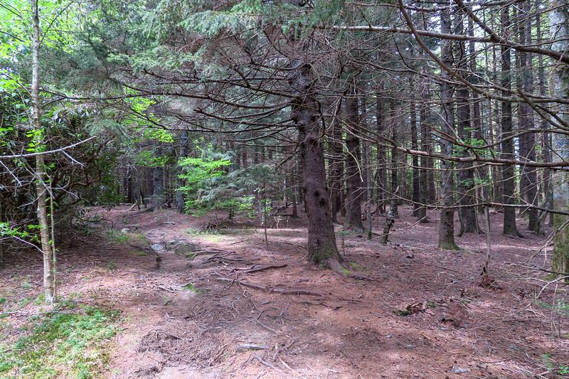 Mountains-to-Sea Trail -- 5,140'