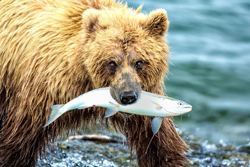 Alaska_2013_FH0T8272.jpg