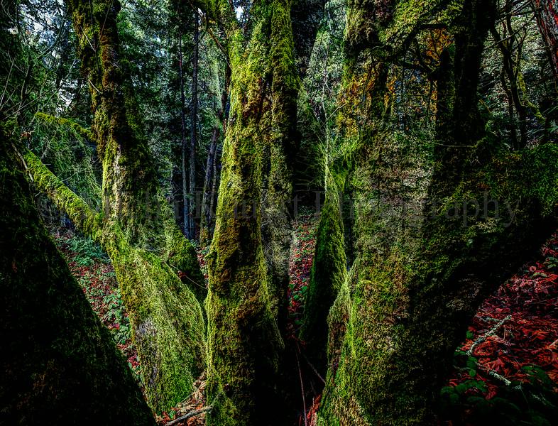 Moss on Trees
