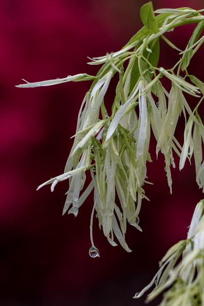 160501_24_6321_Flowers-1.jpg
