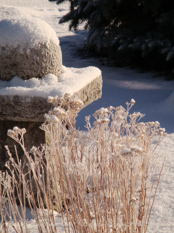 snow on the water feature in the garden