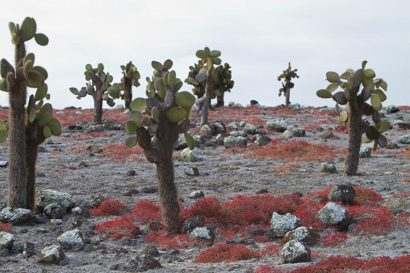 Cactus Trees S Plaza.jpg
