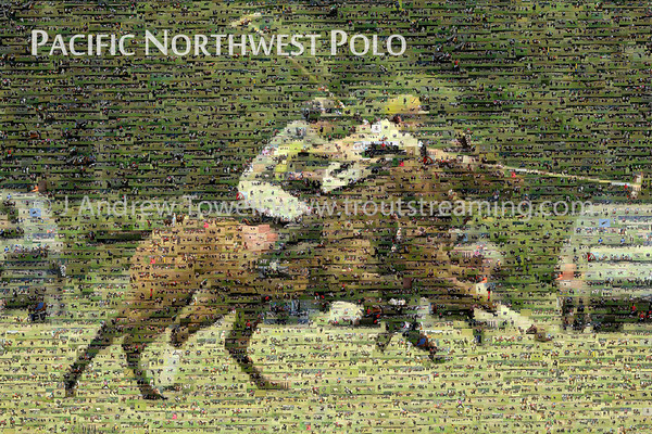 Polo Posters and Mosaics