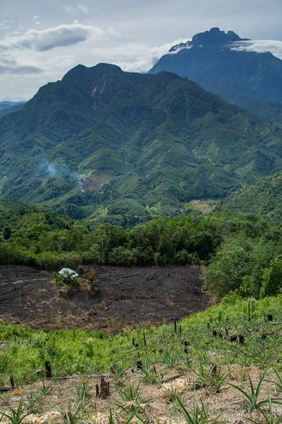 Kinabatangan River-3490.jpg