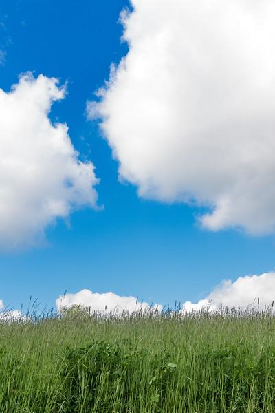 Grønt gras og bøå himmel