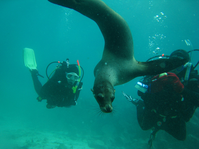 Diving in the Galapagos (295 of 392)