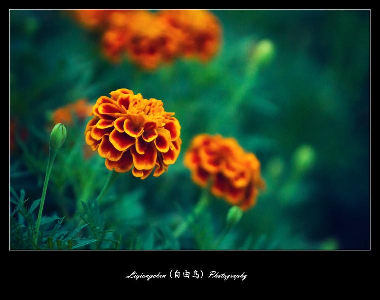 IMG_3306-L.jpg