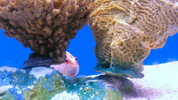 AllFish Emporium