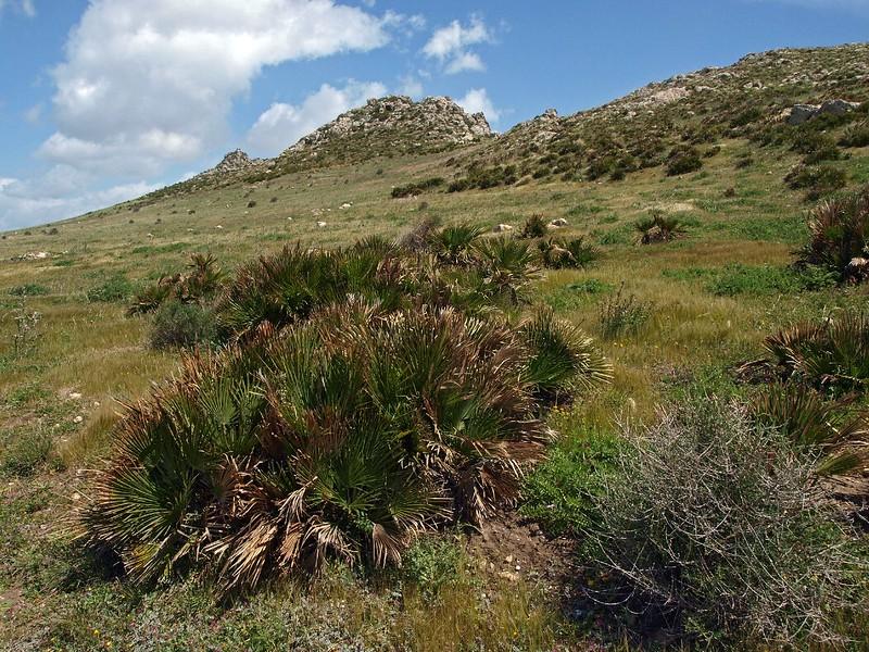 Punta Bianca Palma di M. 14-04-12 (7).jpg