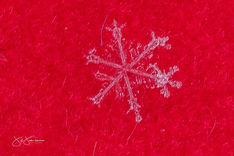 snowflakes-2301.jpg