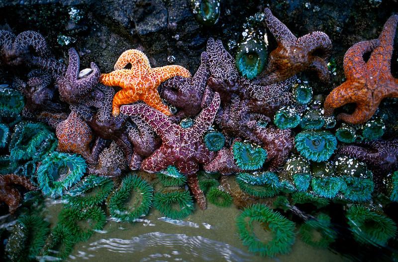 starfish tiff final.jpg