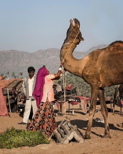 011-CamelWrangling_W2A2040.jpg