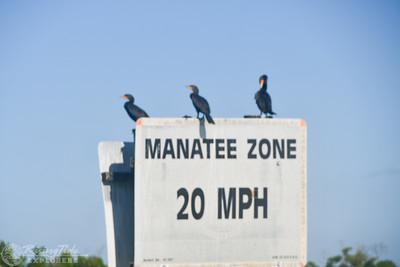 9AM Mangrove Tunnel Kayak Tour - Mace