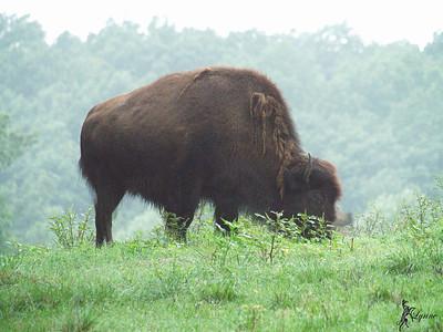NC Zoo Aug 2012